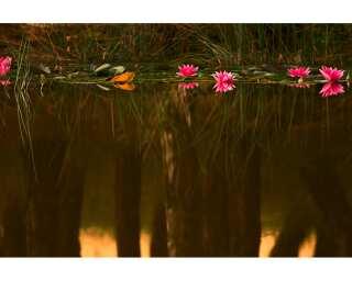 Fototapete «Lagoon» 031250