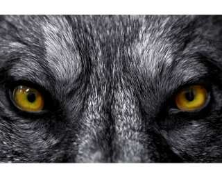Fototapete «Eye to Eye with the Wolf» 036090