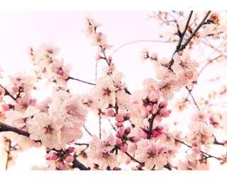 impression numérique «Cherry Blossom» 036240