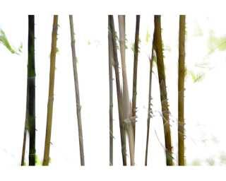Photo wallpaper «Thin Bamboo» 036270