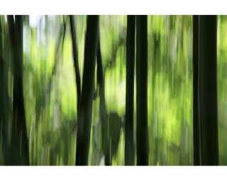 Photo wallpaper «Bamboo motion blur» 036280