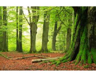 Photo wallpaper «Forest» 036290