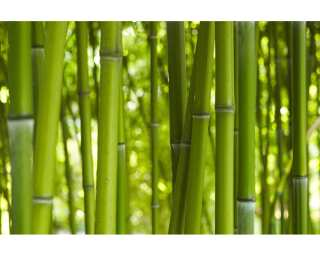 Livingwalls Фотообои «Bamboo in daylight» 036310