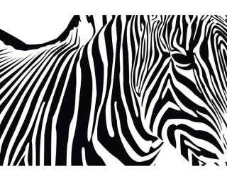 Photo wallpaper «Zebra» 036430