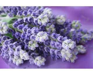 impression numérique «Lavender bunch» 036520