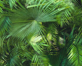 A.S. Création Wallpaper «Jungle, 3D, Black, Green» 362001