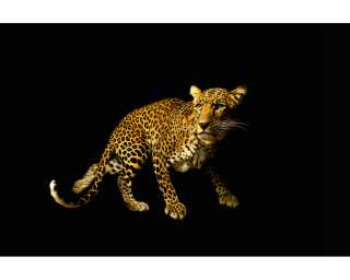 Architects Paper Photo wallpaper «Leopard» 470036