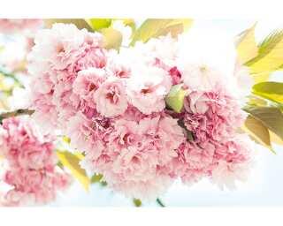 Fototapete «Springtime» 470143