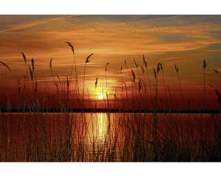 Fototapete «Sunset at the lake» 470295