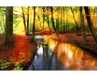Fototapete «Forest Stream» 470303