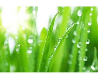 Livingwalls Фотообои «Grass in Dewdrops» 4703201
