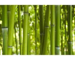 Livingwalls impression numérique «Bambooin Daylight» 470322