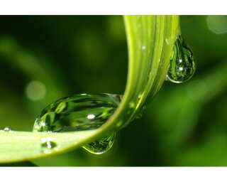 Livingwalls Фотообои «Dewdrops on Grass» 4703231