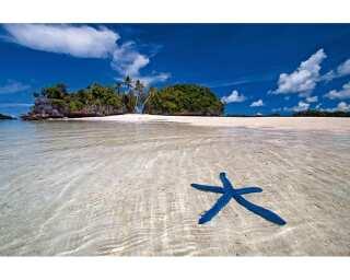 Livingwalls impression numérique «Blue Starfish» 470328