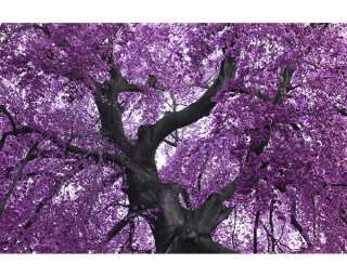 Livingwalls Фотообои «Purple Tree» 470378