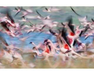Fototapete «Kenya Flamingos» 470500
