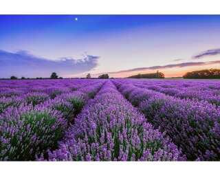 Livingwalls Photo wallpaper «Lavender» 4706221