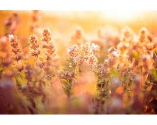 Livingwalls Фотообои «Flower Detail» 470625