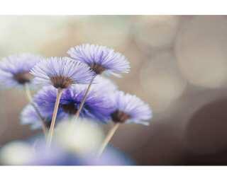 Livingwalls Fototapete «Flower Detail» 470629