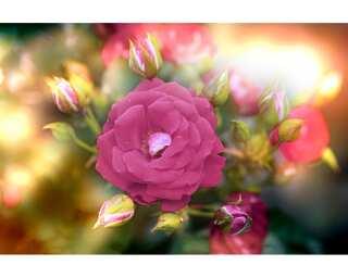 Livingwalls Фотообои «Flower Detail» 470631