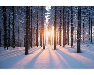 Livingwalls Photo wallpaper «Winter Forest» 470641