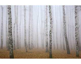 Livingwalls Photo wallpaper «Birch in Fog» 470643