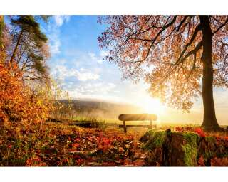 Livingwalls Photo wallpaper «Autumn Morning» 470644