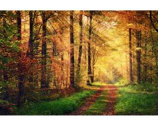 Livingwalls Photo wallpaper «Autumn Forest 2» 470646