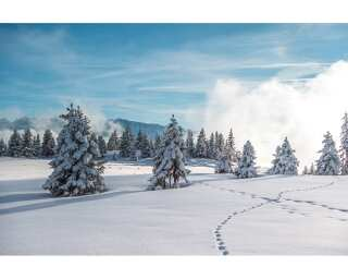 Livingwalls Photo wallpaper «Winter Forest 1» 470648