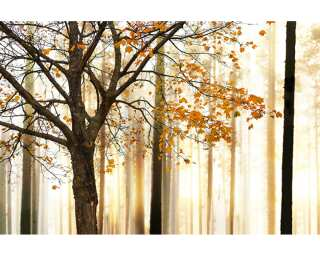 Livingwalls Photo wallpaper «Tree Detail» 4706501