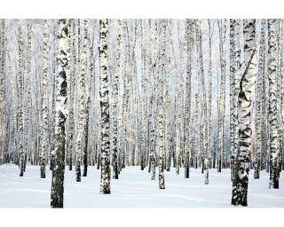 Livingwalls Photo wallpaper «Birch in Winter» 470652
