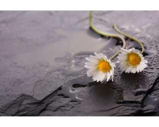 Livingwalls Photo wallpaper «Flowers on Stone» 470670