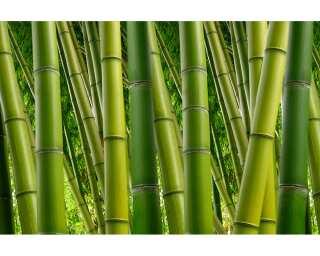 Livingwalls Photo wallpaper «Bambus 2» 470680
