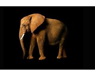 Livingwalls Photo wallpaper «Elephant Side» 470682