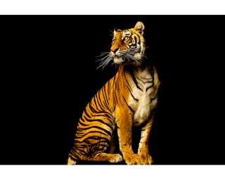 Livingwalls Photo wallpaper «Tiger» 470753