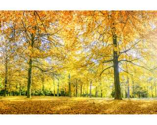Architects Paper Fototapete «Autumn Forest» 470832