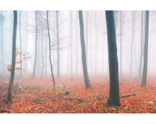 Architects Paper Fototapete «Fog in Forest» 470836