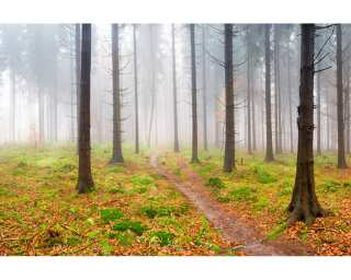 Architects Paper Fototapete «Fog in Forest» 470837