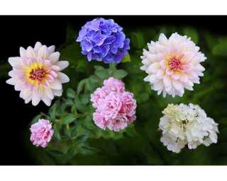 Fototapete «Flowers» 470862