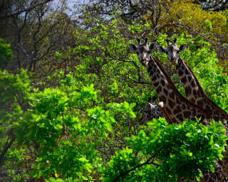 Livingwalls Фотообои «Tansania» DD100602