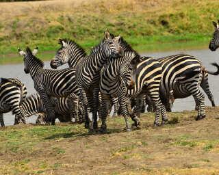 Livingwalls Фотообои «Tansania» DD100621