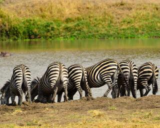 Livingwalls Фотообои «Tansania» DD100626