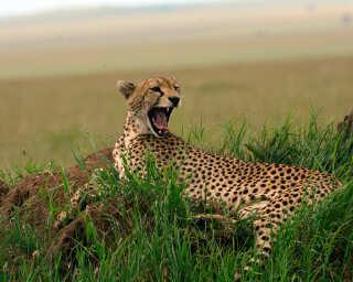 Livingwalls Фотообои «Tansania» DD100640