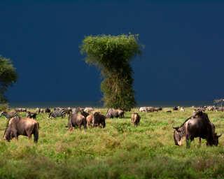 Livingwalls Фотообои «Tansania» DD100709