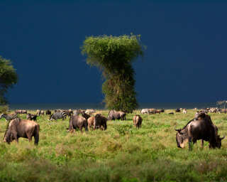 Livingwalls Фотообои «Tansania» DD100714