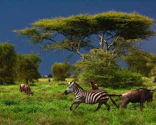 Livingwalls impression numérique «Tansania» DD100716