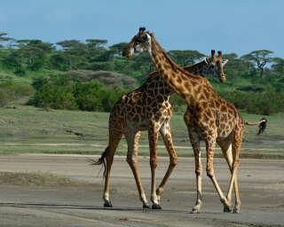 Livingwalls Fototapete «Tansania» DD100721
