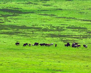 Livingwalls Fototapete «Tansania» DD100745