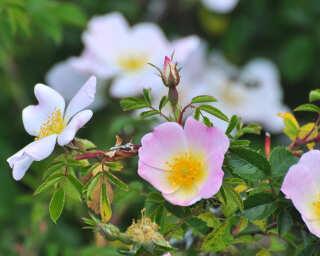 Fototapete «Blumen» DD100776