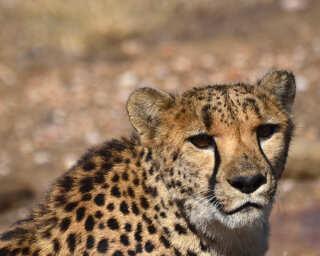 Livingwalls Фотообои «Tansania» DD101052
